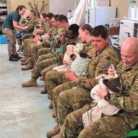 In ihrer Pause kümmerten sich australische Soldaten um verletzte Koalas.