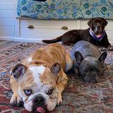 Reese Witherspoons Hunde liegen auf dem Teppich