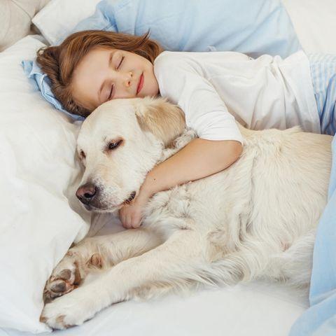Ein kleines Mädchen liegt mit einem Hund im Bett