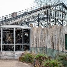 Am 17. Februarbeginnen die Abrissarbeiten am abgebrannten Affenhaus im Krefelder Zoo