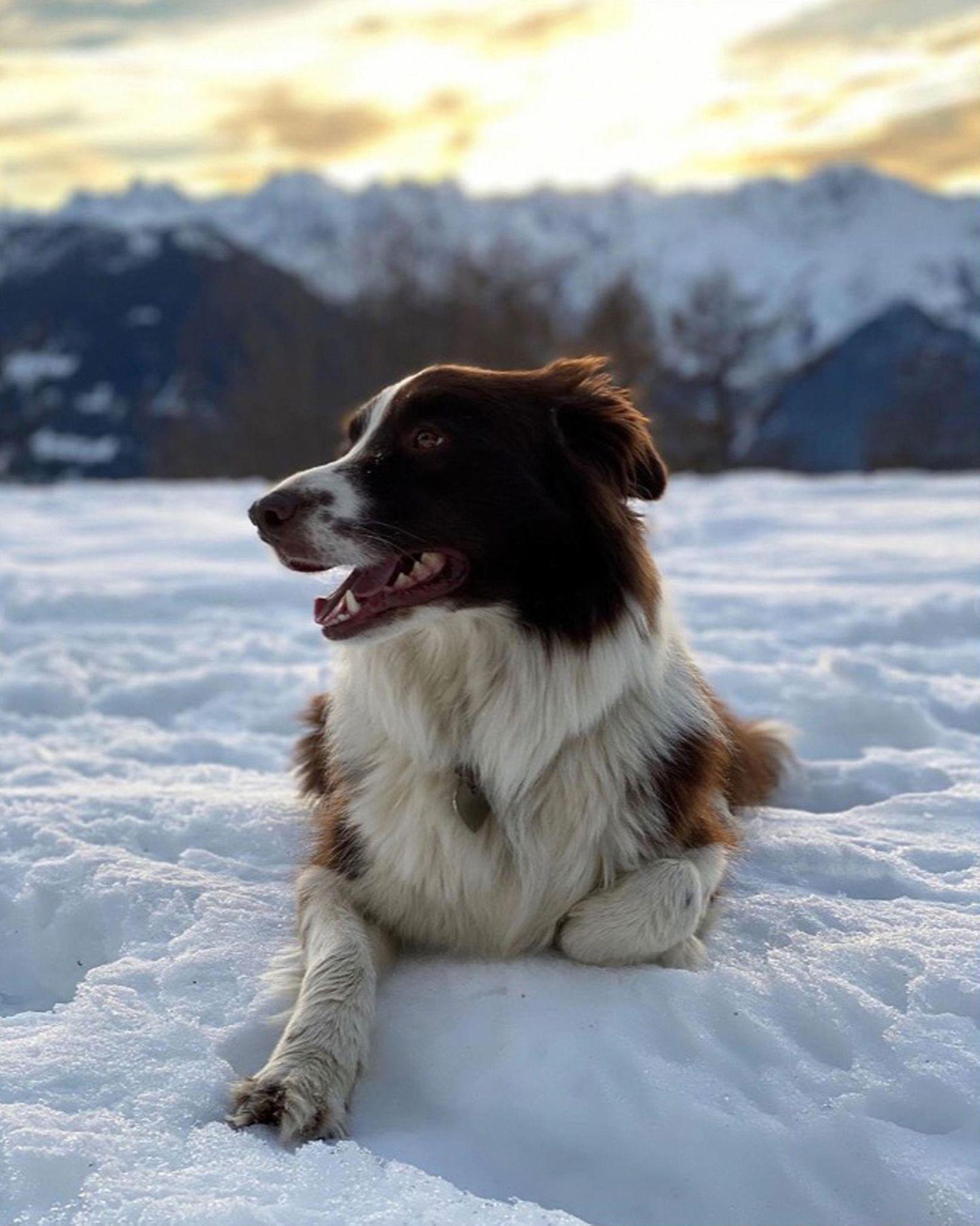 24. Februar 2020  Was für ein Hundeleben! Bei soviel Idylle lässt sich Grace nur allzu gern von ihrem royalen Frauchen fotografieren.
