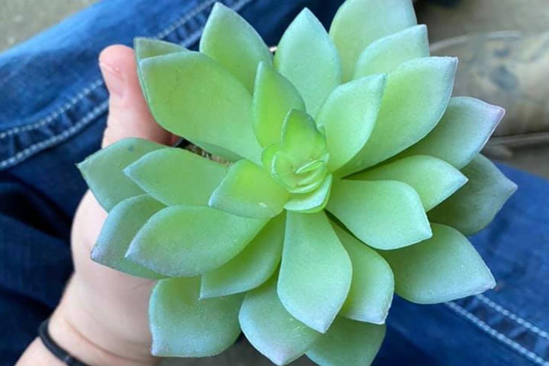 Caelie Wilkes präsentiert auf Facebook ihre einstige Lieblingspflanze.