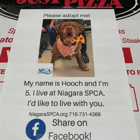 Adoption im Pizzakarton: Für den guten Zweck: Pizzeria liefert Kartons mit Tierbildern