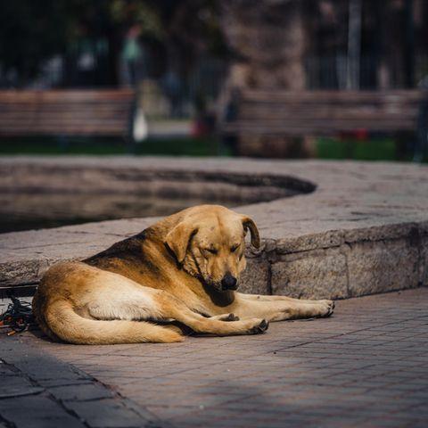 In Düsseldorf müssen Hundebesitzer aktuell mehr denn je auf ihre süßen Vierbeiner aufpassen.