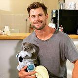 Chris Hemsworth hält einen Koala-Baby auf dem Arm