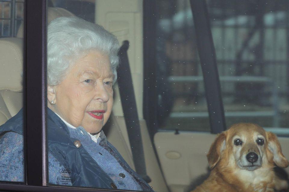 Queen Elizabeth bei der Abfahrt aus dem Buckingham Palast aus London. Mit dabei: einer ihrer Hunde.