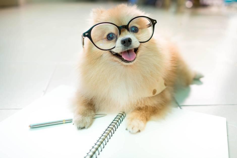 Hunde im Homeoffice: Eine süße Ablenkung.