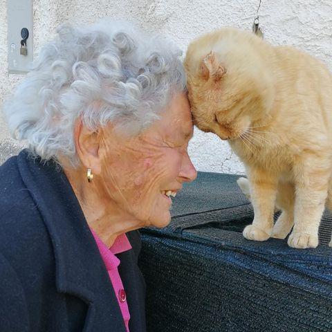 Emotionales Wiedersehen zwischen Dora und ihrer vermissten Katze.