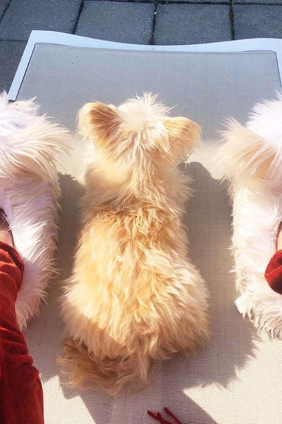 Zusammen ist man weniger allein. Schauspielerin Susan Sarandon sorgt dafür, dass sich ihre kleineFellnase in guter Gesellschaft befindet.