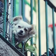 In Belgrad seilte eine Frau ihren Hund vom Balkon ab. (Symbolbild)