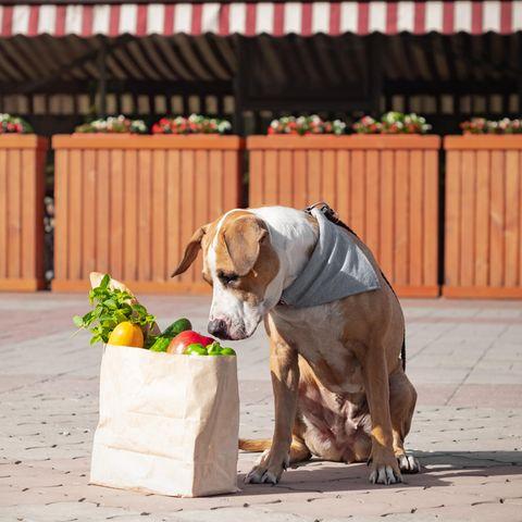 Clevere Idee: Während das Herrchen in Quarantäne ist, geht das Haustier einkaufen. (Symbolbild)
