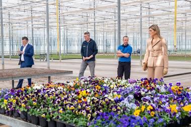 27. März 2020  Königin Máximaweiß, dass den niederländischen Gartenbaubetrieben schwere Zeiten bevorstehen. Normalerweise exportieren die Niederlande jährlich Blumen und Pflanzen im Wert von mehreren Milliarden Euro. Im Zuchtbetrieb Zuidbaak in Honselersdijk informiert sie sich über die bereits spürbaren und zu erwartenden Auswirkungen der Coronakrise auf die Blumenindustrie.