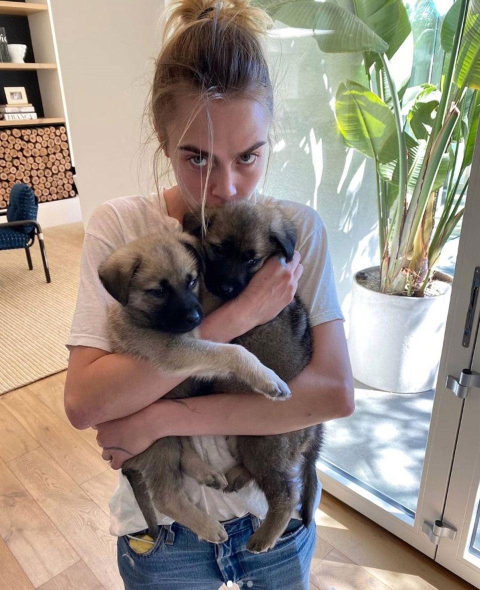 Im Hause von Supermodel Cara Delevingne gibt es niedlichen Nachwuchs, und das gleich doppelt. Zum Glück hat die Hunde-Mama jetzt viel Zeit,sich um Bowie und Hendrix zu kümmern.