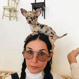 Auf den Hund gekommen - nur anders herum: Demi Moore scheint allerdings auch nicht so genau zu wissen, was das süße Tierchen auf ihrem Kopf macht.