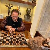 """Irgendwie muss man die Zeit ja herumkriegen. Arnold Schwarzenegger gibt ein Update zu seinem Mini-Esel Lulu. Auf Instagram gibt er zu: """"Sie ist nicht die beste Schachpartnerin, aber sie macht sich""""."""