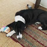 """Einen einsamen Geburtstag feiert Michael J. Foxs Hund Gus. Auf Instagram entschuldigt sich der """"Zurück in die Zukunft"""" Schauspieler dafür, dass niemand zur Party gekommen ist. Seine Tochter Schuyler fotografiert den traurigen Vierbeiner mit seiner Stoff-Geburtstagstorte."""