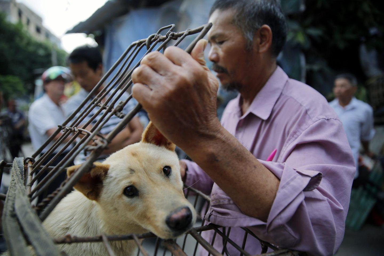 Hundefleisch darf in Shenzhen bald nicht mehr verspeist werden (Symbolbild)