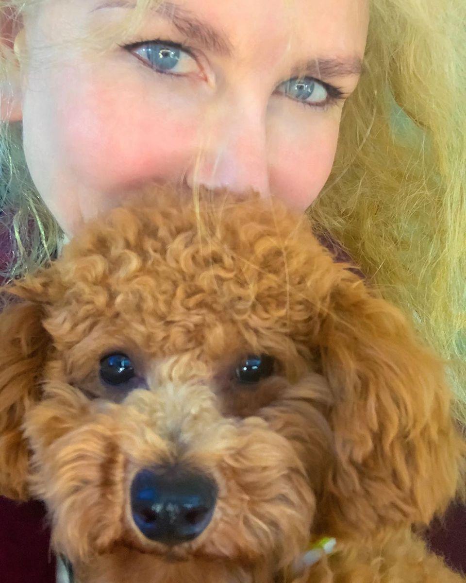 """Dieser kleine Pudel hat zwei Knopfaugen, die süßer nicht sein könnten. Nicole Kidman liebt das kleine Wesen ohne Ende und schreibt auf Instagram: """"Er mag das jüngste Mitglied unserer Familie sein, aber er ist ein weise alte Seele""""."""