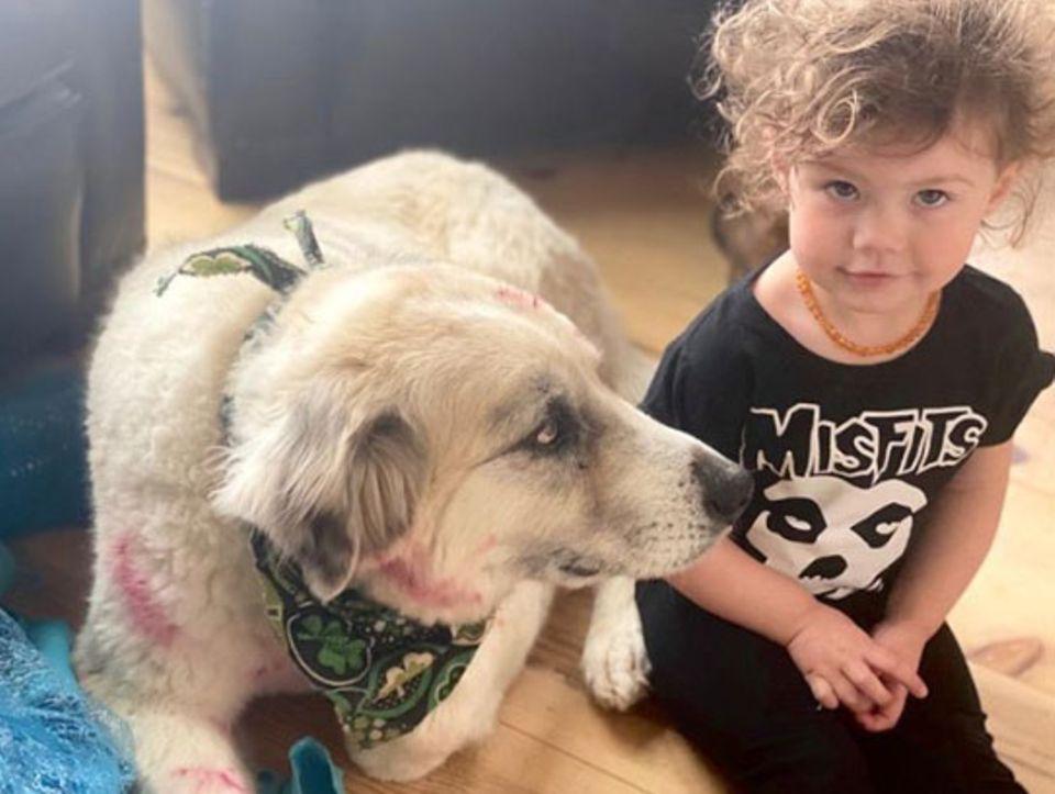 Jeffrey Dean Morgans kleine Tochter George hat Hund Bandit ein kleines Makeover verpasst. Schick!