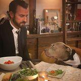 """Okay, danach gucken wir aber """"Susi undStrolch"""" auf Netflix? Geduldigleistet Hund Kuma Schauspieler Justin Theroux beim romantischen Dinner Gesellschaft."""