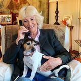 """24. April 2020  Insbesonderewährend derIsolation in Zeiten von Corona ist es wichtig, nicht den Kontakt zueinander zu verlieren. Im Vereinten Königreich bietet """"The Silver Line"""" eine telefonische Anlaufstelle für Menschen, die sich einsam fühlen. Als Schirmherrinder Hilfsorganisation greift Herzogin Camilla heute sogar selbst zum Hörer."""