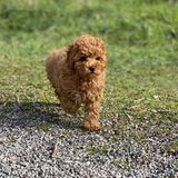 2. Mai 2020  Via Instagram verkünden Prinzessin Victoria und Prinz Daniel die frohe Botschaft: Hund Rio ist auf Schloss Haga eingezogen!