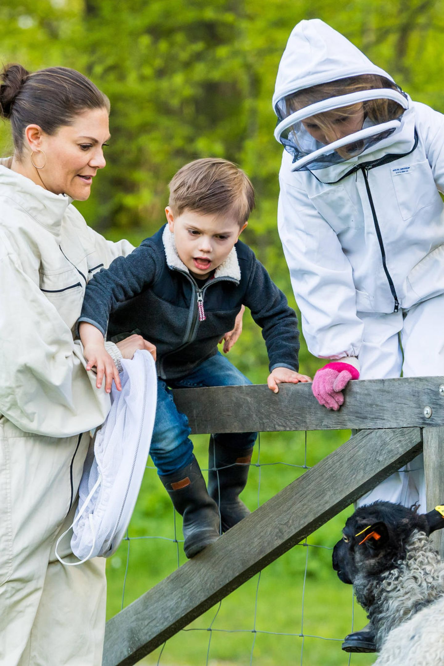 20. Mai 2020  Nach ihrem Besuch bei den Bienen statten Prinzessin Victoria und die Kidsauch den Schafen im Park von Schloss Hagaeinen kleinen Besuch ab. Wagemutig klettern Prinz Oscar undPrinzessin Estelle in Begleitung von Mama über den Zaun auf die Weide.