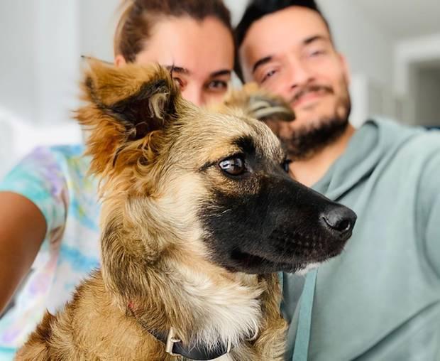 """""""Mein Name ist Cici - oder genauer gesagt Cipoletta Zarrella"""", so stellen Jana Ina und Giovanni Zarrella ihr neues Familienmitglied auf Instagram vor. Die junge Hündin ist ungefähr ein halbes Jahr alt und wurde in Ungarn geboren."""