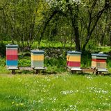 Die schwedische Königsfamilie ist sehr naturverbunden und es liegt ihr viel daran, die Insektenvielfalt zu erhalten. Da es im Schlosspark ein Meer von Blumen und anderen Pflanzen gibt, liegt es nahe, Bienenkörbe aufzustellen.