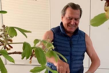 Gerhard Schröder greift gerne selber zum Kochlöffel – vor allem, wenn es leckere Bratkartoffeln gibt. Die Küche im Hause Schröder-Kim sieht auf dem Foto, dasSoyeon Schröder-Kim auf ihrem Instagram-Account veröffentlichthat, hell und geräumig aus. In den weißen Einbauschränken im Hintergrund lassen sich eine Menge Küchenutensilien verstauen. Für ein wohnliches Gefühl dient der Ast eines Kastanienbaumes, der in der Mitte der Küche positioniert ist. Ungewöhnlich: Statt Schürze trägt der ehemalige Bundeskanzler beim Kochen eine Daunenweste – ohne etwas drunter.