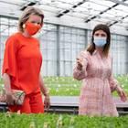 28. Mai 2020  Die Coronaviruskrise hat erhebliche Auswirkungen auf Unternehmen, die in der Blumenzucht tätig sind. Königin Mathilde informiert sich beim BlumenzüchterGediflora über die Herstellung und Vermehrung von Pompon-Chrysanthemen und das weitere Vorgehenwährend der Krise. Das Unternehmen gilt als Paradebeispiel für nachhaltiges und weibliches Unternehmertum.