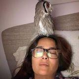 Wer kennt es nicht: Man schläft ein und hat die Brille noch auf... und eine Eule auf dem Kopf!? Bei Salma Hayek kann dies durchaus schon mal vorkommen. Die putzige Zwergohreule gehört seit einem Jahr zur Familie und begleitet die Hollywood-Schauspielerin auf Schritt und Tritt.