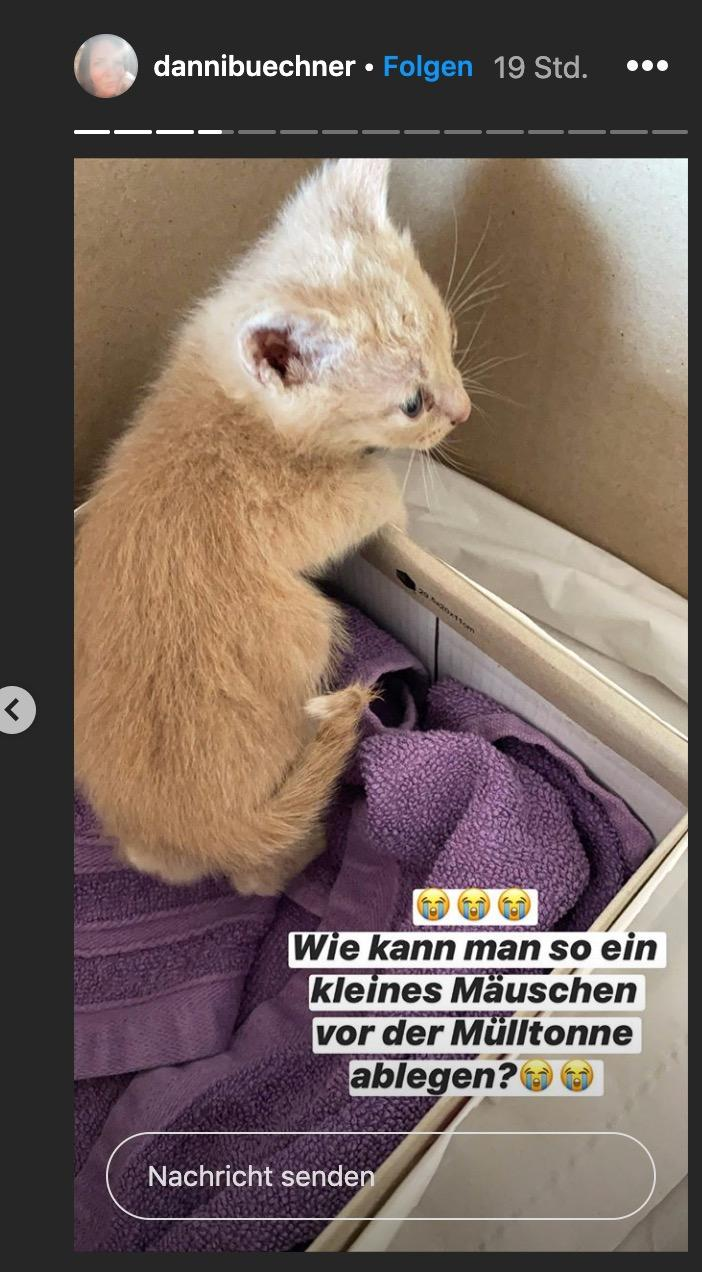 So sieht das Katzenbaby der Büchners aus
