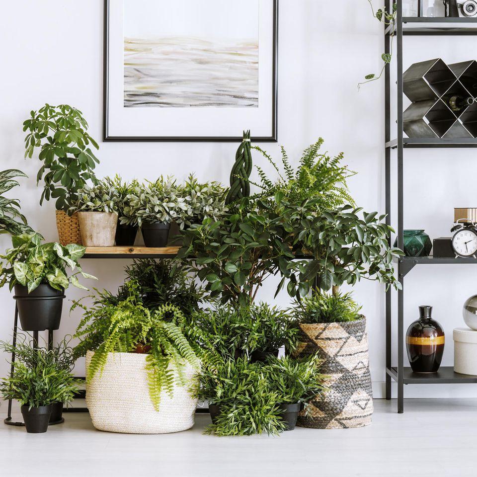 Schöne Zimmerpflanzen beleben Ihr Zuhause.