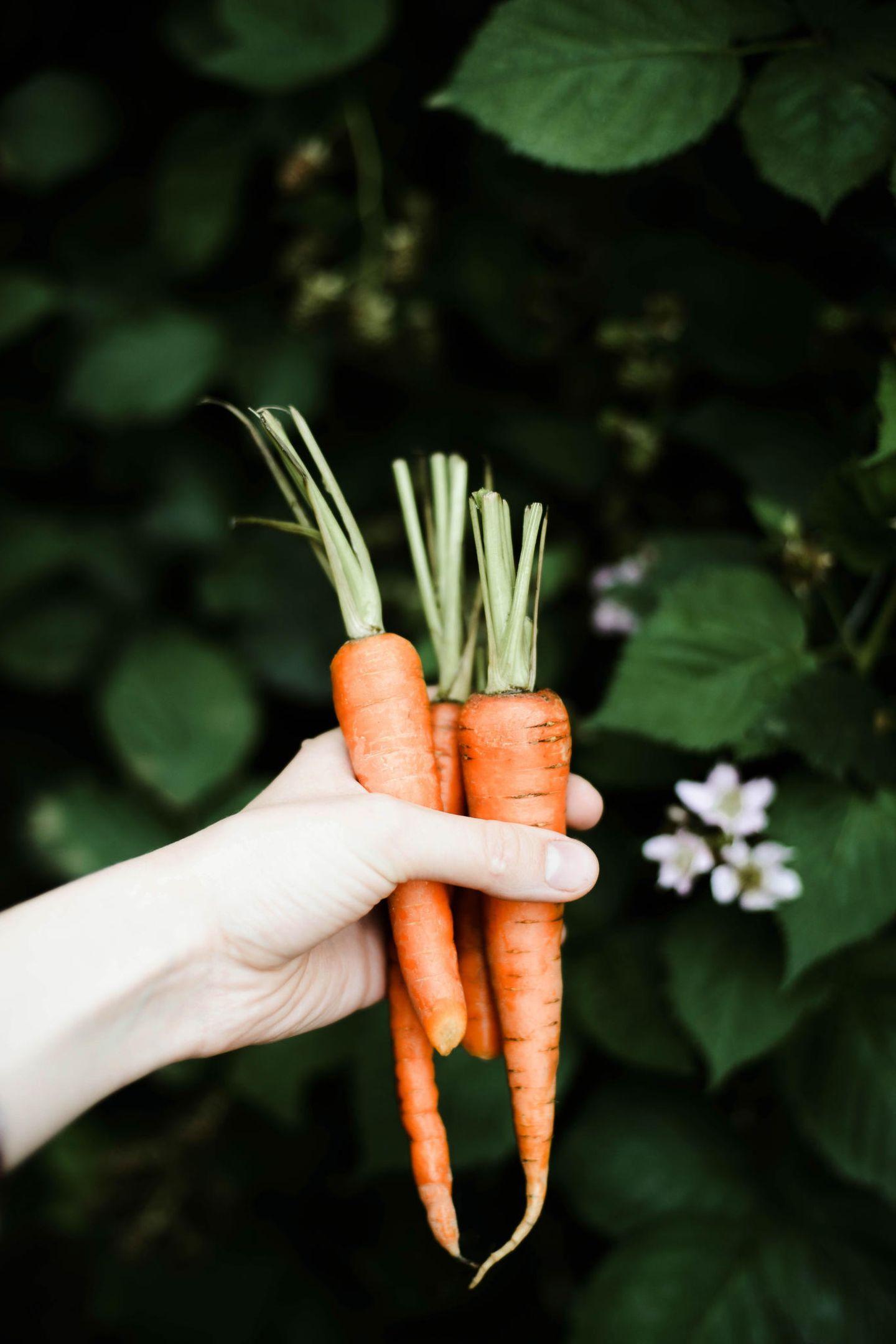 Wer seinen Körper mit Glow-Foods versorgen will, sollte unbedingt zu Karotten greifen. Das orangefarbene Gemüse gehört zu den Klassikern für schöne Haut. SeinGeheimnis: jede Menge Betacarotin. Der Pflanzenfarbstoff verleiht nicht nur den Karotten eine satte Farbe, sondern lässt auch den Teint des Essers schön erstrahlen.