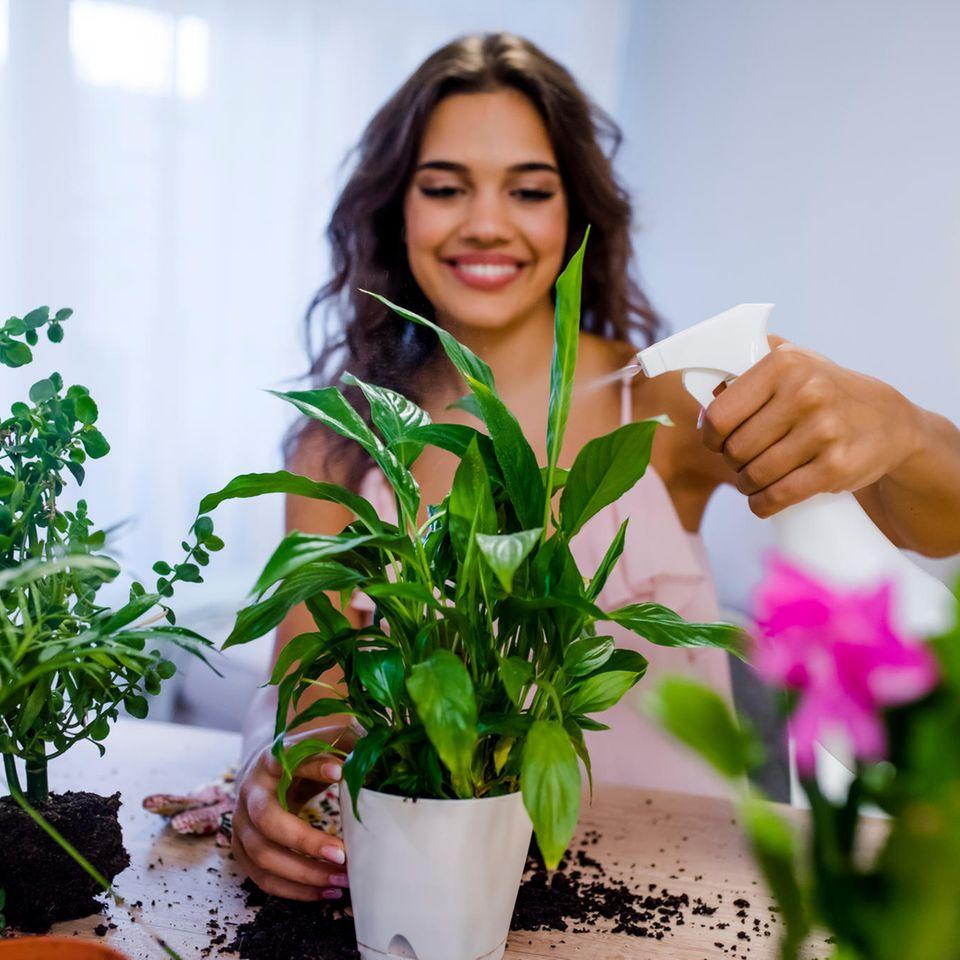 Zimmerpflanzen pflegen: Frau besprüht Pflanze mit Wasser.