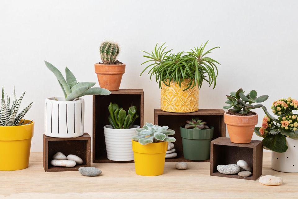 Zimmerpflanzen pflegen: Verschiedene Pflanzen in verschiedenen Töpfen.