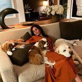 Courteney Cox kuschelt mit ihren Hunden