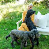 Während des Fototermins entsteht dieser schöne Schnappschuss von Hundeliebhaberin Prinzessin Mette-Marit. Die Labradoodles Milly Kakao undMuffin sind ebenfalls Teil der royalen Familie.
