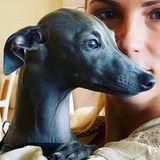 Michelle Hunziker kann nach wie vor nicht genug vom jüngsten Familienmitglied bekommen. So fotografiert sie Hündchen Odino in jeder Lebenslage. Der kleine Greyhound hat sogar einen eigenen Instagram-Account.