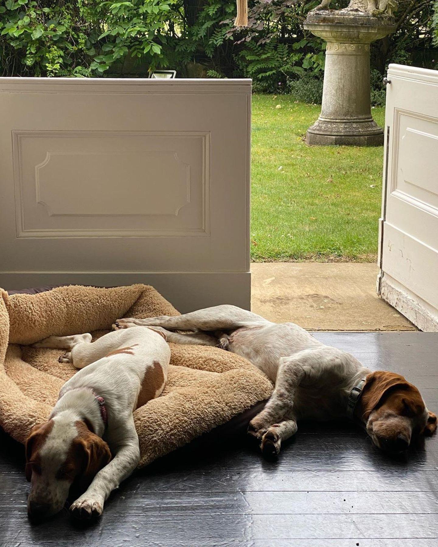 """Charles Spencer, der jüngere Bruder der verstorbenen Prinzessin Diana, hat auf Instagram Bilder seiner Hunde Forager und Rufus geteilt. Dazu schreibt er: """"Zeit für ein neues Hundebett"""". Was aber noch interessanter ist als die beiden süßen Fellnasen, ist der Bildhintergrund. Denn Earl Spencer gewährt hier einen seltenen Einblick in den idyllischen Garten, in dem Lady Diana aufgewachsen ist."""