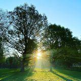 Etliche Bäume rahmen die Parkanlage ein. So herrlich sieht ein Sonnenaufgang an einem Frühlingsmorgen auf dem Familienanwesen aus - wie Charles Spencer mit diesem Instagram-Schnappschuss beweist.