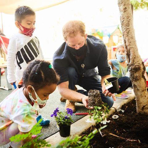 Prinz Harry pflanzt mit Vorschulkindern Blumen ein.