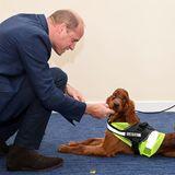 Prinz William trifft Tara, einen fünf Monate alten Irish Red Setter.Er hat eine spezielle Ausbildung erhalten, um Menschen zu helfen, die an einer posttraumatischen Störung leiden. Sie dienen unter anderem alsphysische Barriere zwischen ihrem Partner und der Öffentlichkeit, wodurch Stress reduziert wird und die Betroffenen sich wieder trauen, unter Menschen zu gehen.
