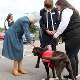 Camilla machtBekanntschaft mit Labrador Basil.Er und seine Kollegen werden darin trainiert, Menschen mit lebensbedrohlichen Krankheiten zu unterstützen. Aktuell lernen die Vierbeiner zum Beispiel, Covid-19-Infektionen zu erschnüffeln.