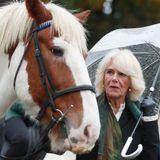 """Herzogin Camilla ist bekanntlich eine Pferdenärrin und so tauchen immer wieder lustige Schnappschüsse mit ihr und den Vierbeinern auf. Bei ihrem Besuch des """"Ebony Horse Club"""" im Stadtviertel Brixton in London beäugt Camilla skeptisch ihr tierisches Frisuren-Double. Zum Abschied flüstert sie einem der Pferde noch ein """"See you later"""" zu."""