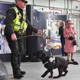 """Hunde sind eine der großen Leidenschaften Ihrer Majestät. Kein Wunder also, dass sie sichbesonders für Polizei-Suchhund Max interessiert. Er wird darauf trainiert,Sprengstoff zu erschnüffeln - und zwar mit Hilfe eines Tennisballs. """"Interessiert er sich mehr für den Sprengstoff oder den Ball?"""" will die Queen wissen. """"Immer für den Ball!"""" sagtsein Trainer und erntet damitGelächter, auch von der Queen. Als langjährige Hundehalterin weiß sie genau, woran die Vierbeiner am meisten Spaß haben."""