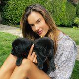 Topmodel Alessandra Ambrosio ist gerade auf der Suche nach Namen für diese bezaubernden kleinen Welpen. Irgendwelche Ideen?
