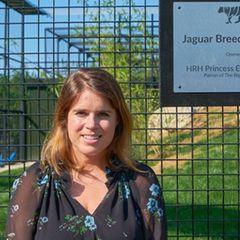 ... zur Eröffnung eines neuen Jaguar-Zuchtzentrums im Dorf Smarden in Kent. Das Kleid ist ein Allround-Talent und wir erfreuen uns jedes Mal, wenn Prinzessin Eugenie sich darin zeigt.