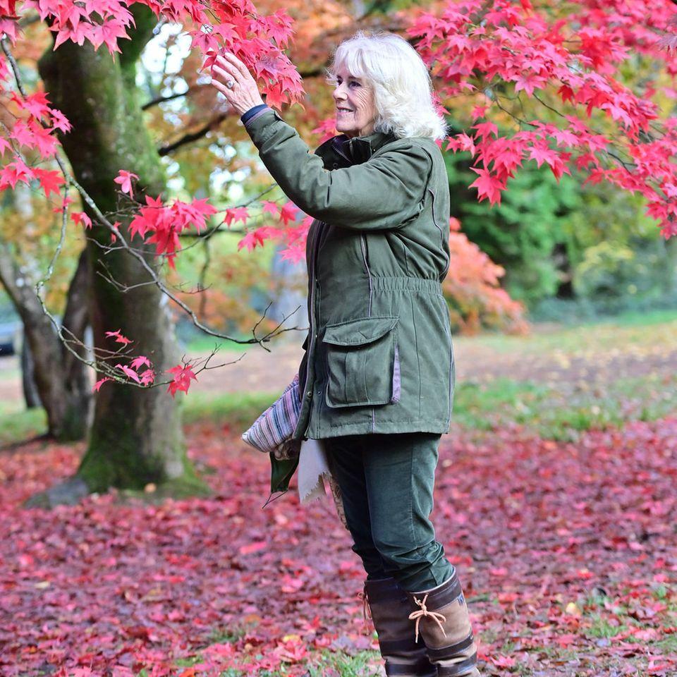 Was für ein wunderschöner Herbsttag in Gloucestershire, Großbritannien!Und Camilla hätte ihren Look zum dunkelrot gefärbten Laub nicht besser abstimmen können.Mit einer olivgrünen Parka-Jacke und einer ebenfalls grünfarbenen Jeans spaziert sie durch das Natur- und TierschutzgebietArboretum Westonbirt in Tetbury. Der Blick fällt dabei auch auf ihre rustikal wirkenden Stiefel ...